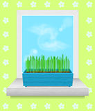 Box with grass stands on the windowsill. Stock Photos