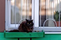 In the box at the green home window the cat is sitting. In the box at the green home window the cat is sitting stock photos