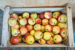 Box with heap of jonagold apples Stock Photo