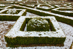 Box hedge with crisp snow Royalty Free Stock Photography