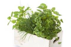 Box with herbs Stock Photos