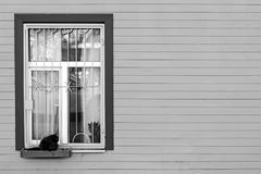 In the box at the home window the cat is sitting. Black and whit. E photography stock image