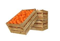 box isolated wooden Вполне оранжевого плодоовощ белизна изолированная предпосылкой иллюстрация штока