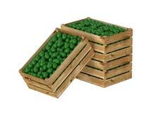 box isolated wooden Вполне плодоовощ известки белизна изолированная предпосылкой иллюстрация штока