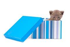 Box with kitten Stock Photo