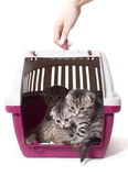 Box for kitties Royalty Free Stock Photography