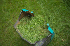 The box of the lawn mower   with green cutting grass, cleaning. The box of the machine to cut green grass lawn, cleaning Royalty Free Stock Photo