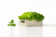 Box of lettuce Stock Photography