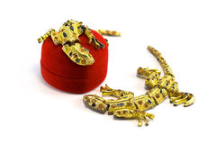 Box and lizards Royalty Free Stock Photos