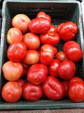very red and appetizing tomatoes royalty free stock photos