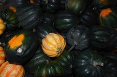 Box of mini pumpkins Stock Photos