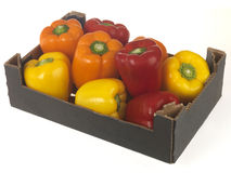 Box of Mixed Peppers Stock Photography