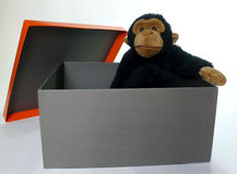 Box with monkey. Open gift box with a adorable fluffy monkey inside isolated over white Stock Photos