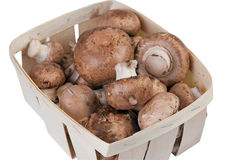 Box with mushrooms Royalty Free Stock Image