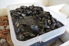 A box of mussels Stock Photography