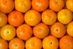 Box of oranges Stock Images