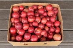Box of Organic Beacon (MALUS domestica 'Beacon') Apples. Organic red beacon apples in box Stock Images