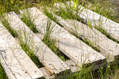 Box Pallet in Grass. Close up Royalty Free Stock Photography
