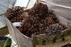 Box of pinecones. Brown pinecones sitting in a box on a metal shelf royalty free stock photography