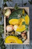 Box with pumpkin and apples Royalty Free Stock Images