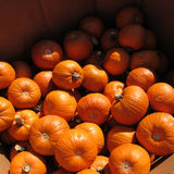 Box of Pumpkins Stock Image