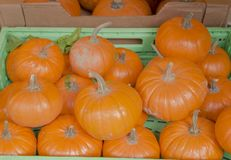 Box with pumpkins. A box full of pumpkins in a grocery shelves royalty free stock image
