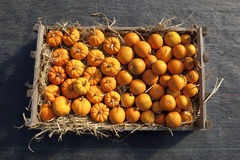 Box of pumpkins and squashes Stock Image