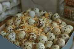 Box with quail eggs. Closeup stock images