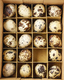 Box of quail eggs Royalty Free Stock Photography