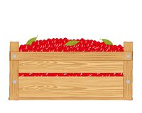 Box with red berry. Wooden box with red berry on white background Royalty Free Stock Photography