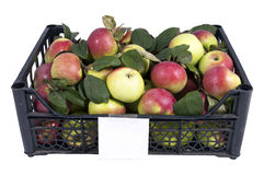 The box of red and green apples Royalty Free Stock Images