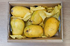 Box of ripe mangoes. Five yellow ripe mangoes in the box Stock Photography