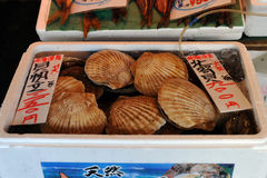 Box of Scallops Stock Images