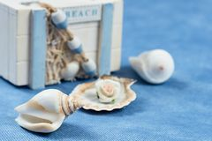 Box with seashells on a blue background royalty free stock photography