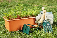Box with seedling and gardening tools stand on the grass Royalty Free Stock Photo