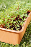 Box with seedling stands on green grass Stock Photography