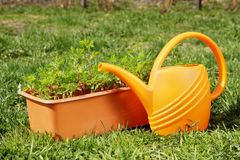 Box with seedling and watering can stand on the grass Royalty Free Stock Photography