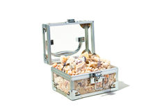 Box with shells Royalty Free Stock Photos