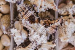 Box of shells fresh from the sea, ocean. royalty free stock photo