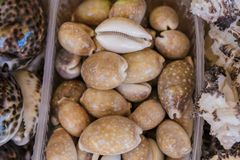 Box of shells fresh from the sea, ocean. stock photo
