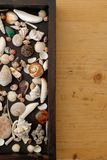 A box with shells royalty free stock image