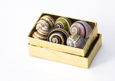 Box of Snail Shells Stock Photos