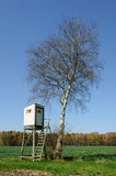 Box stand at a birch Royalty Free Stock Images
