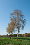 Box stand at a row of birches Stock Photo