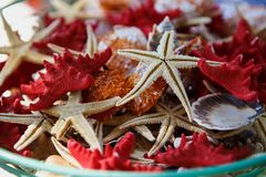 Box with star fish and sea shells for sale on resort Royalty Free Stock Photos