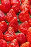 Box of strawberries, harvest collection Royalty Free Stock Image