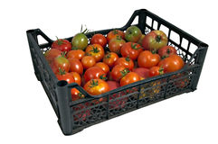 The box of tasty red and green tomatoes Royalty Free Stock Photo