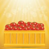 Box of tomatoes Stock Images