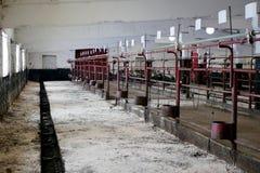 Box voor het houden van dieren op het landbouwbedrijf royalty-vrije stock afbeelding