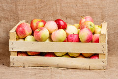 Box With Apples Royalty Free Stock Photos